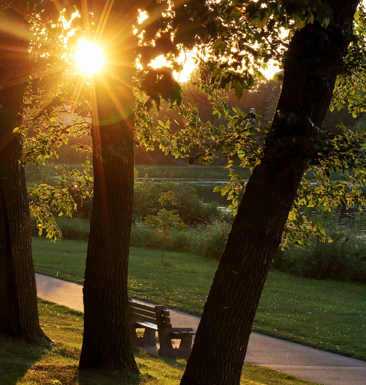 Walking Path and Park Bench Bathed in Gold Sunlight